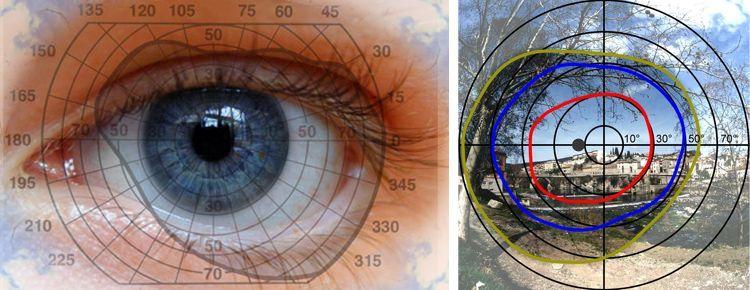 Периферическое зрение и поле зрения