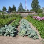 Что можно сделать в огороде до конца июля?