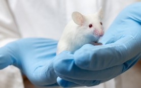 Один ген превращает клетки колоректального рака в здоровые