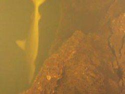 Ученые нашли акул и ската в кратере вулкана
