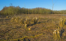 Из чего будут делать биотопливо в будущем?