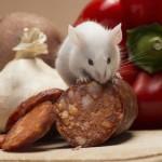 Ожирение может быть вызвано иммунными неполадками