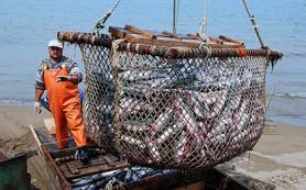 Росрыболовство задумалось о господдержке ловцов кальмара и сельди