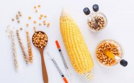 Российские ученые опровергли исследования о вреде ГМО