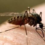 Медики обнаружили первый случай заболевания лихорадкой Зика в Аргентине