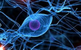 Восприятие мира влияет на деятельность головного мозга человека