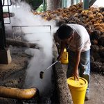 Президент России рассказал о возможном введении акцизов на пальмовое масло