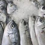 Россия будет поставлять в Иран рыбу и мясо