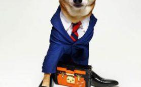 Россия: «Аэрофлота» повысил собачьи цены