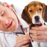«Био-Вет»: круглосуточная квалифицированная и срочная помощь при кашле у собак