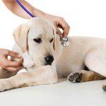 Кастрация кота в ветеринарной клинике Био-Вет - это лучшая клиника для животных