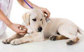 Кастрация кота в ветеринарной клинике Био-Вет — это лучшая клиника для животных