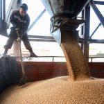 Аграрии попросили Медведева отменить экспортную пошлину на пшеницу