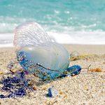 На Пхукете закрыты три пляжа