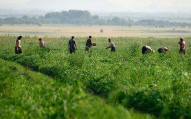Что не поделили аграрии Краснодарского края