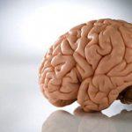 Врачи создали механизм, защищающий мозг человека от травм