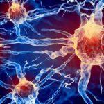 Некоторые клетки организма могут жить даже после смерти человека