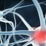 Болезнь Альцгеймера и болезнь Паркинсона связаны с дефектными клетками мозга