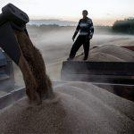 Турция приостановила импорт российского зерна