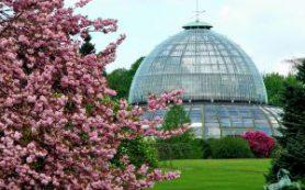 Королевские оранжереи в Брюсселе открыты до 5 мая