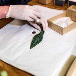 Склад оружия возрастом три тысячи лет нашли в Норвегии