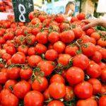 Ткачев назвал срок действия эмбарго в отношении турецких помидоров