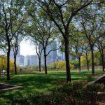 Деревья в городах во время жары способствуют образованию озона
