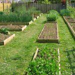 Как подготовить огород к посадке?