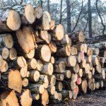 """ЕС предложил Киеву """"продать"""" украинские леса за 600 миллионов долларов"""