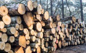 ЕС предложил Киеву «продать» украинские леса за 600 миллионов долларов