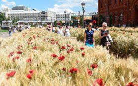 Аграрии пообещали рекордный урожай пшеницы в России