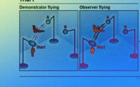 Нейроны гиппокампа летучих мышей и крыс помогли им найти сородичей