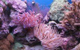 Россиянка арестована в Таиланде за сбор кораллов