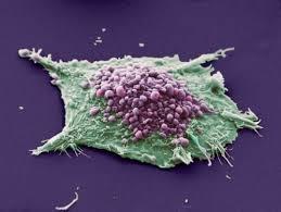 Клетка ремонтирует ДНК по часам