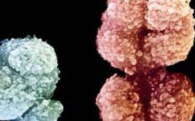 Где прячется мужская ДНК