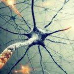 В мозге человека нашли новые нейроны