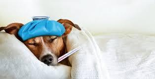Запах болезни переходит с больных на здоровых