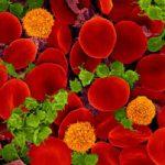 У новорожденных кровь свертывается иначе, чем у взрослых