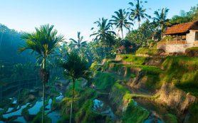 Как развлечься на курорте Убуд (Индонезия)