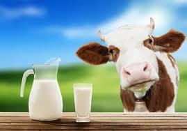 Молочное хозяйство c молочной непереносимостью