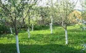 Почва в плодоносящих садах