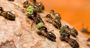 Термиты помогают лесам пережить засуху
