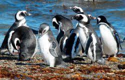Почему в холодных водах так много теплокровных животных