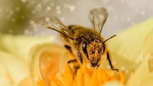 Пчелы умеют складывать и вычитать