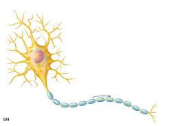 Мусороуборочный белок поддерживает мозг при инсульте