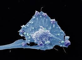 Лекарство от проказы убивает раковые клетки