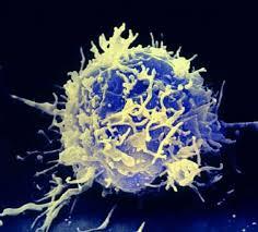 Иммунные клетки вооружили против трудных вирусов