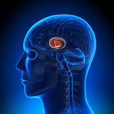 Как мозг оценивает прошлый опыт