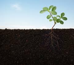 Когда растения почувствовали гравитацию