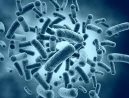 Как искать антибиотики?